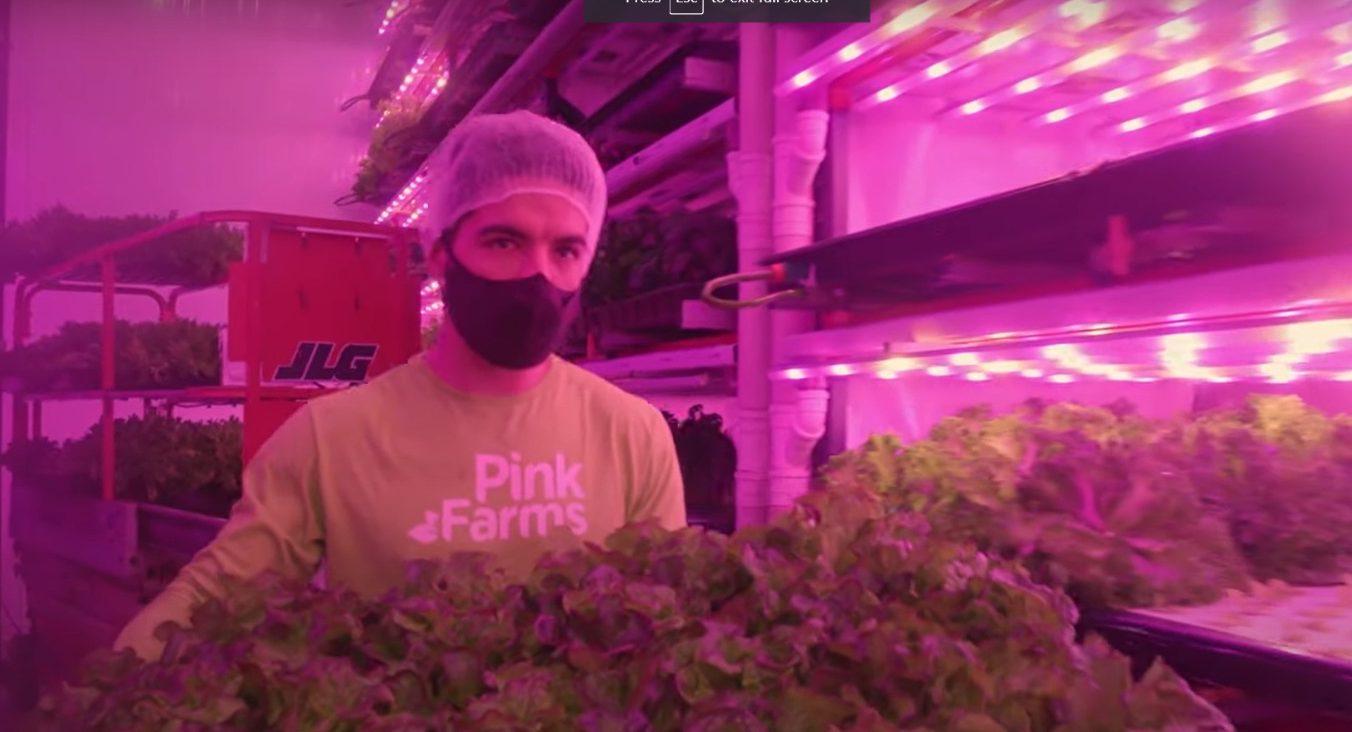 Pink Farms – A maior fazenda vertical urbana da América Latina